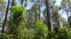 Bosques 2 (4)