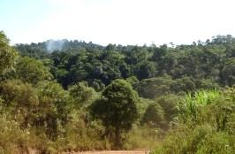 Foto ArgentinaForestal Reserva Yaboti