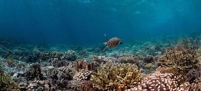 Biodiversidad en extincion Fauna Marina