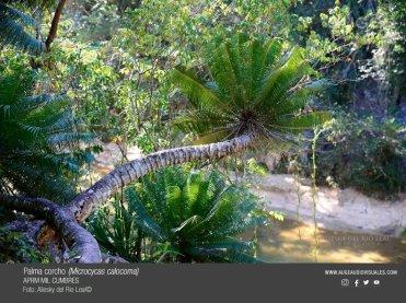Cuba Parque MC Foto Auge Productora Audiovisual2