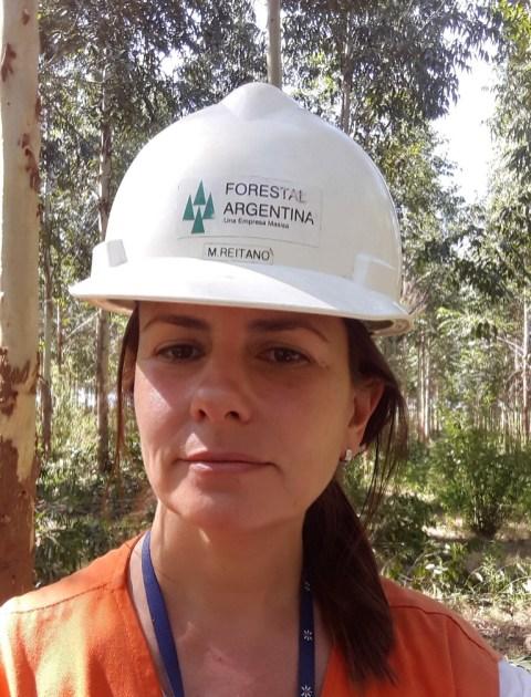 Masisa Forestal (3)