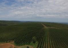 Paraguay Forestal Silvis1