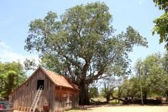 5 Samuu más grande del Chaco 3