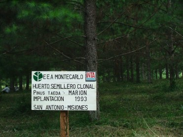 6 INTA-San-Antonio-Ensayos-forestales