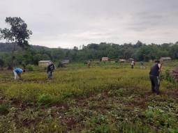 Comunidad (cultivos1)