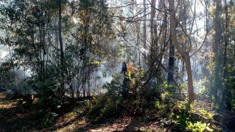 Puerto Rico Incendio Forestal 3