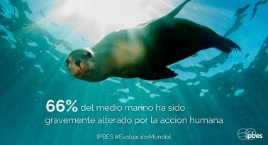 IPBES Marino