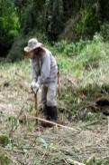 plantación en fajas (2)