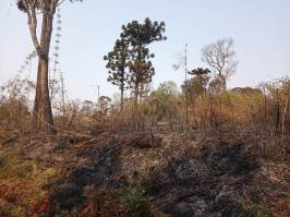 Incendio en el PP Araucaria Agosto 2021 (1)