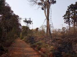 Incendio en el PP Araucaria Agosto 2021 (2)