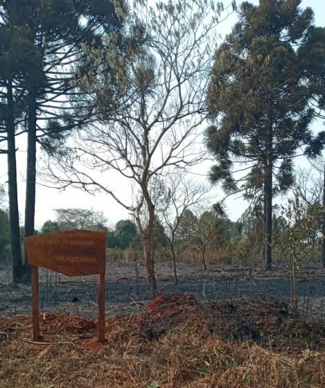 Incendio en el Parque Araucaria (13)