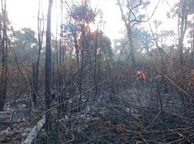 Incendio en el Parque Araucaria (7)