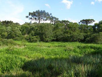 Parque Provincial de las Araucarias, en Argentina