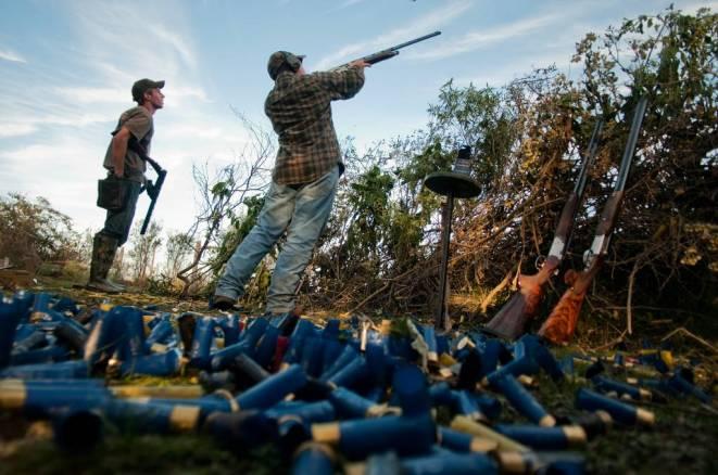 Dove hunting at Cortaderas