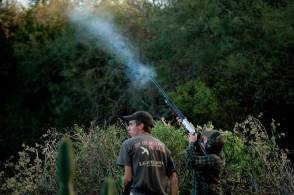 Shooting doves