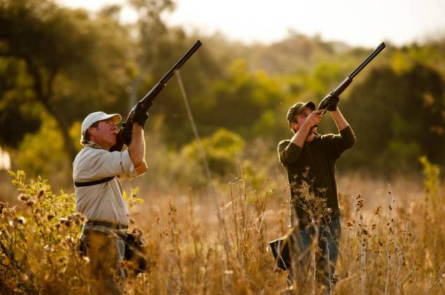 Dove hunting Argentina
