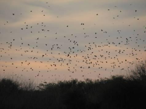 Hunting doves at Estancia Cortaderas