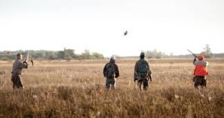 Partridge hunt in Argentina