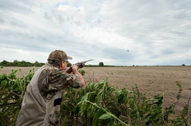 Hunting pigeons