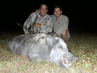 Wild boar hunting