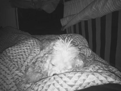 Tiny sleeps a lot