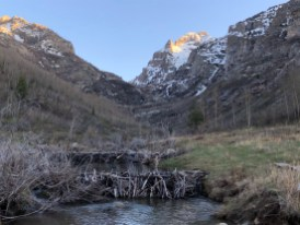 Tiered beaver dams
