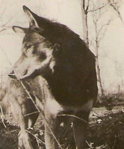Chips, most decorated dog of WWII. (Credits: Herson Whitley)