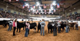 2019-2020 Livestock Shows
