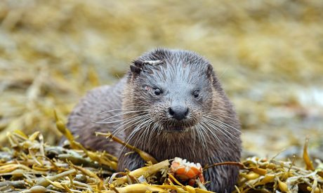 Otter Wildlife Cruises