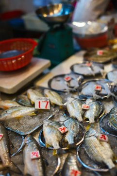 hong-kong-fish-market