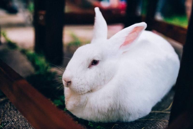 Photo de Charlotte le lapin