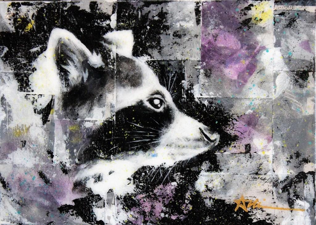 Portrait de Spyder le raton laveur