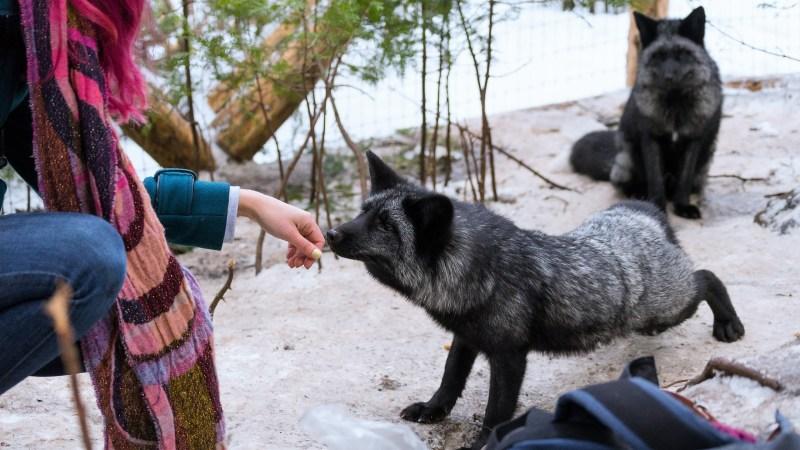 Photo de Wapi le renard avec l'artiste