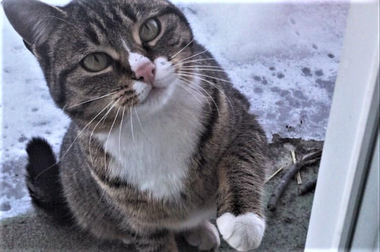 Tabitha (chatte) à l'extérieur en hiver