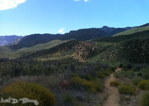 Trail into the Mountains