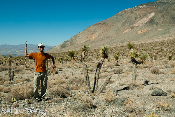Me being a Yucca Tree