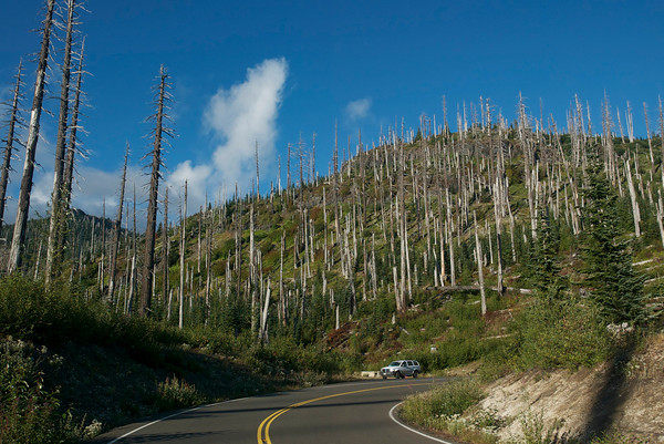 Driving to Mt. St. Helens