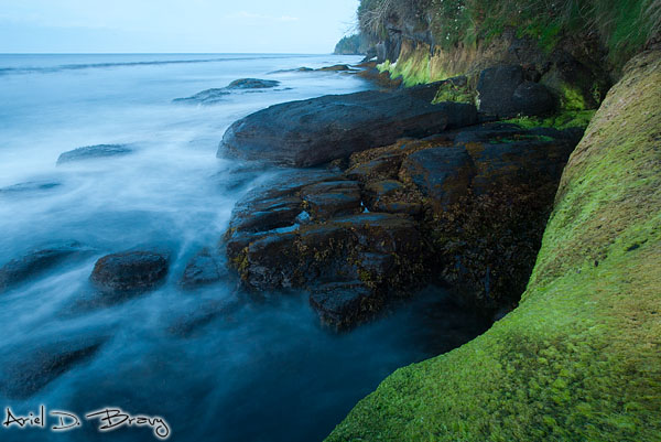 Ocean waves roll in and out against the rocky seaweed-covered coastline