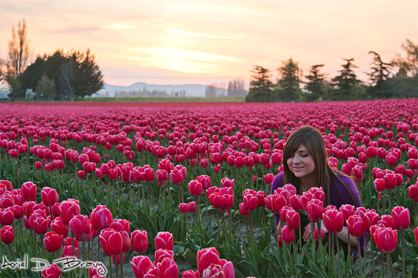 Anna at the Skagit Valey Tulip Festival at sunset