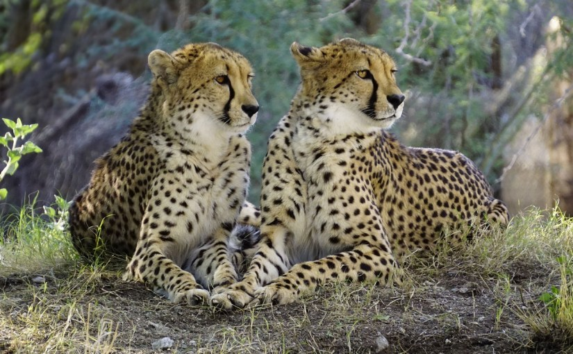 A Cheetah, Sea Creatures and a Spider – Philosophers Looking At Animals