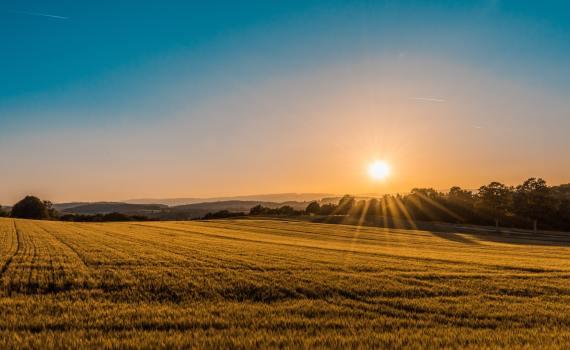 sunrise over field