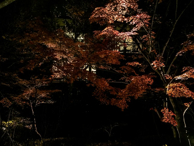 autumn colors leaves trees karuizawa night nagano japan