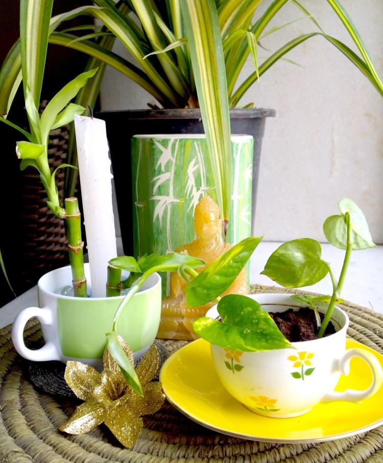 Tea Themed Room