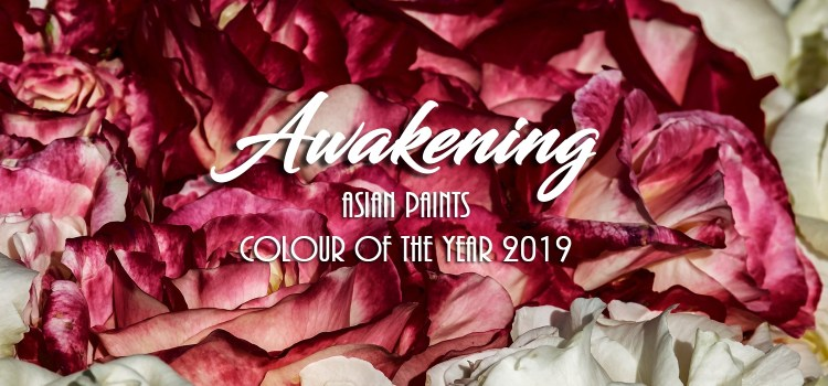Burgundy Decor Inspired by 'Awakening' - Asian Paints COTY 2019