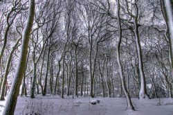 Warley Woods - March 13