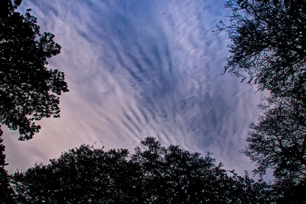 Warley Woods - Mackerel Sky = neither wet nor dry...