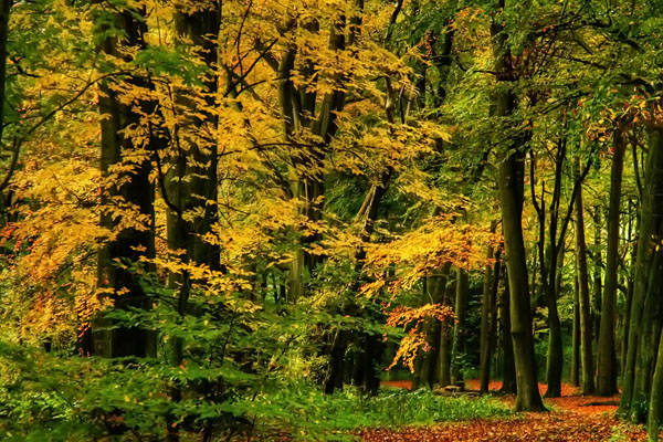 Warley Woods - Autumn Leaves