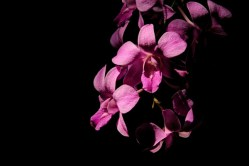 Jim Thompson House - orchid