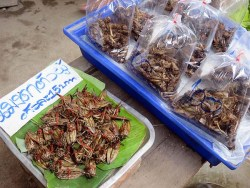 Thai Market - bugs. The one on the left is added to chilli to make a piquant dip