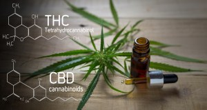 What is the difference between CBD & Cannabis?